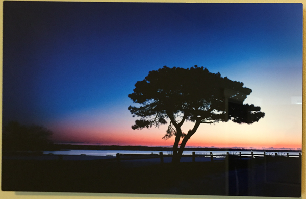"""Lone Tree"" - Photo by Ari Shapiro.  Metal Print with wall hook, 1/2"" Standout from wall. Measures 17""w x 11""h. $40"