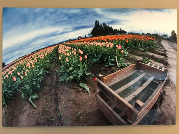 """Gone Picking"" - Photo by Ari Shapiro.  Metal Print with wall hook, 1/2"" Standout from wall. Measures 18""w x 12""h. $40"
